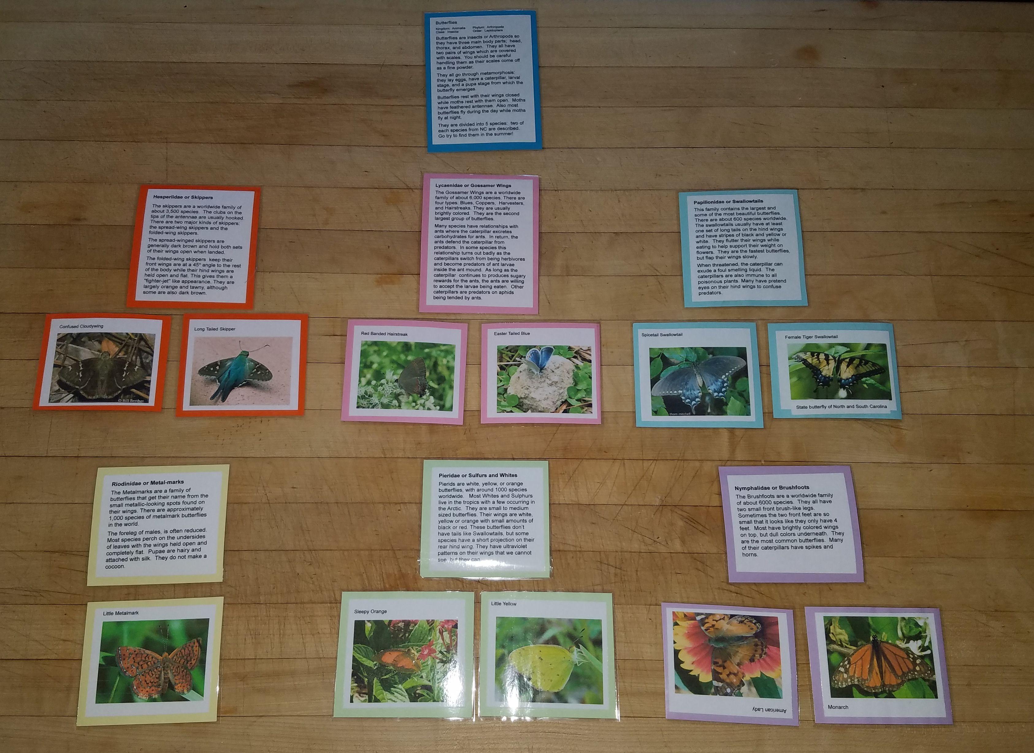 The Montessori Great Lesson Page